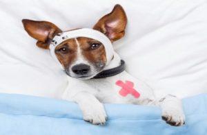 Ayudante tecnico veterinario